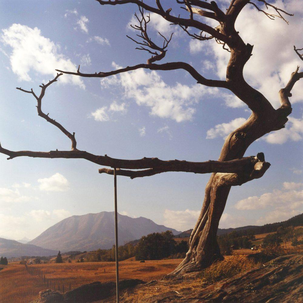 """Dianne Bos, """"Burmis Tree"""", 2012, CPrint - Newzones Gallery, Calgary"""