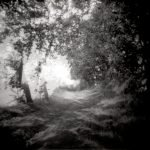 """Dianne Bos, """"Allee Spin, France 1"""" 2013, CPrint - Newzones Gallery, Calgary"""