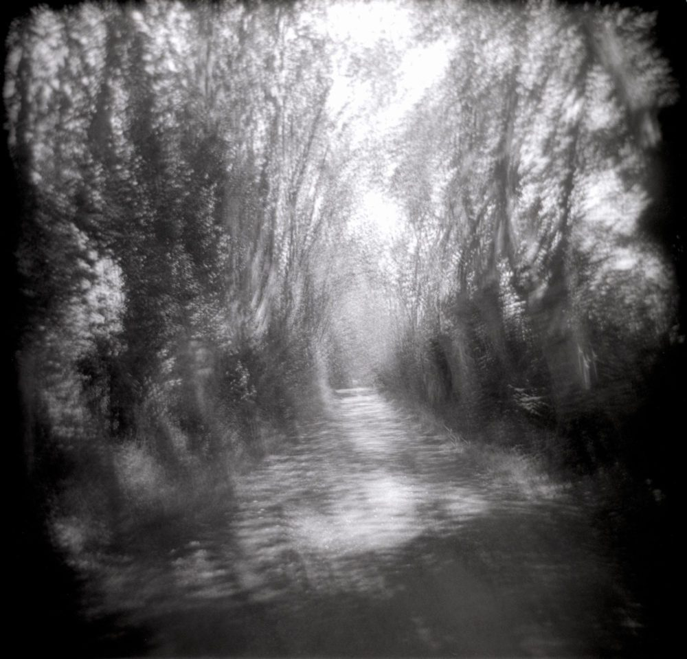 "Dianne Bos, ""Allee Spin, France 4"" 2013, CPrint - Newzones Gallery, Calgary"