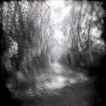 """Dianne Bos, """"Allee Spin, France 4"""" 2013, CPrint - Newzones Gallery, Calgary"""