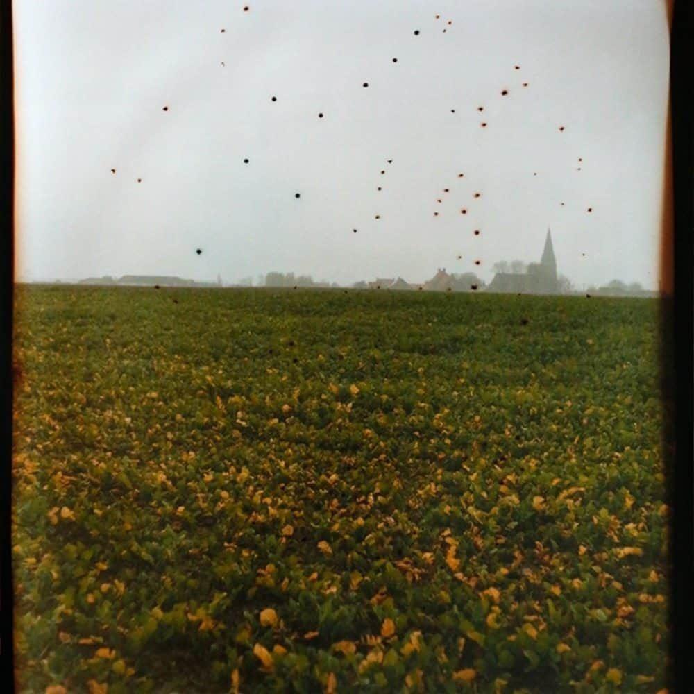 """Dianne Bos, """"Flanders Fields, Belgium"""", 2014 , CPrint - Newzones Gallery, Calgary"""