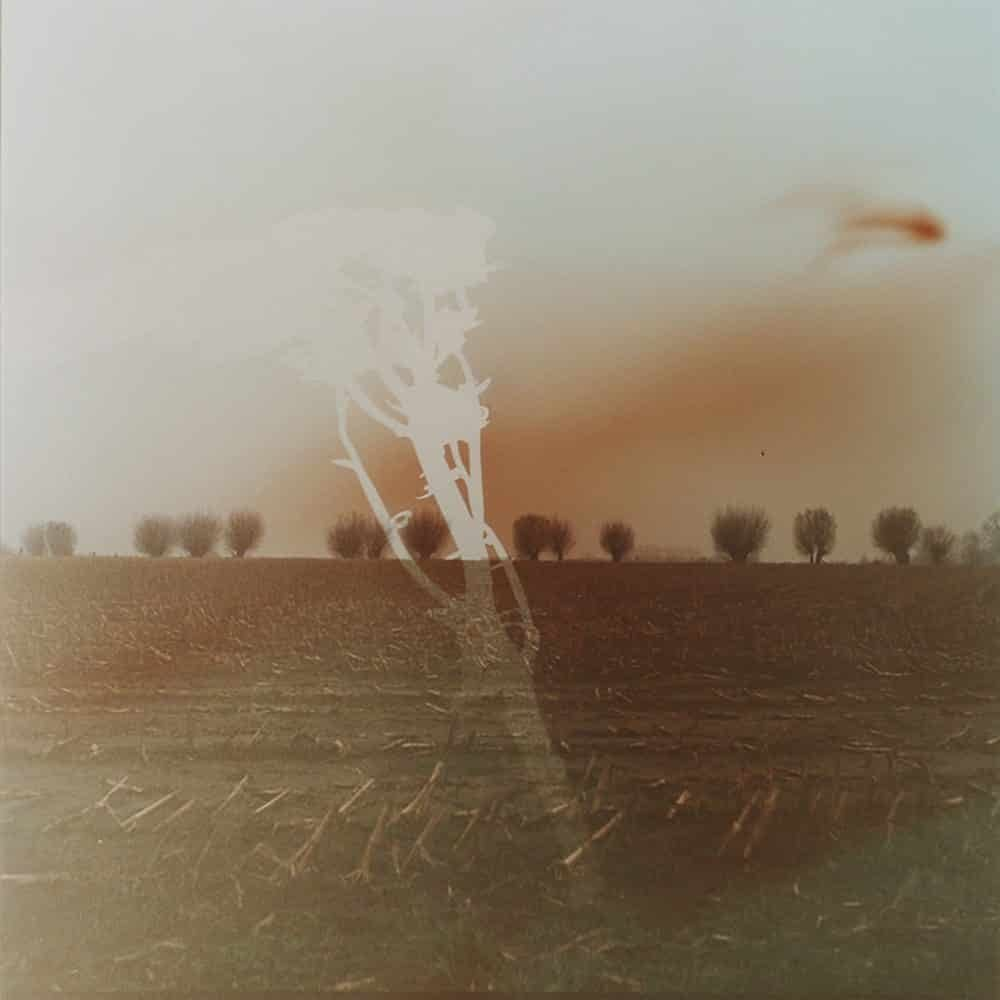 """Dianne Bos, """"Flanders Landscape Trees and Branch"""", 2014, CPrint - Newzones Gallery, Calgary"""