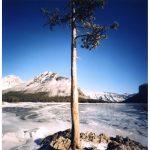 "Dianne Bos, ""Lake Minnewanka Tree"", 2013, CPrint - Newzones Gallery, Calgary"