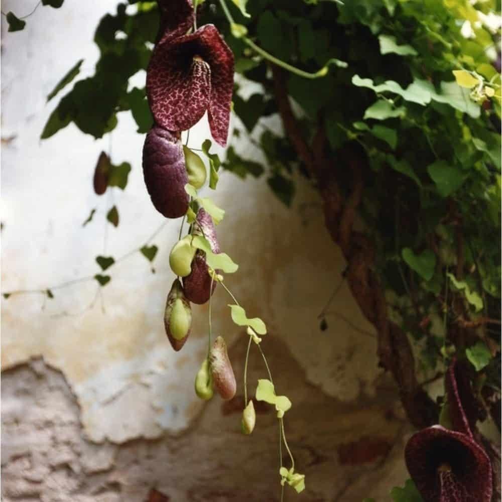 "Dianne Bos, ""Padua Botanical 12"", 2013, CPrint - Newzones Gallery, Calgary"