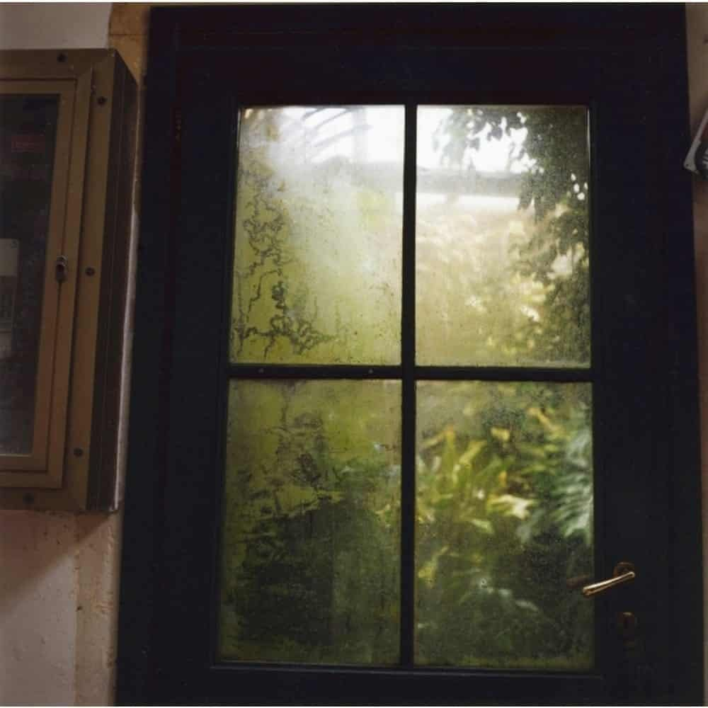"Dianne Bos, ""Padua Botanical 13"", 2013, CPrint - Newzones Gallery, Calgary"