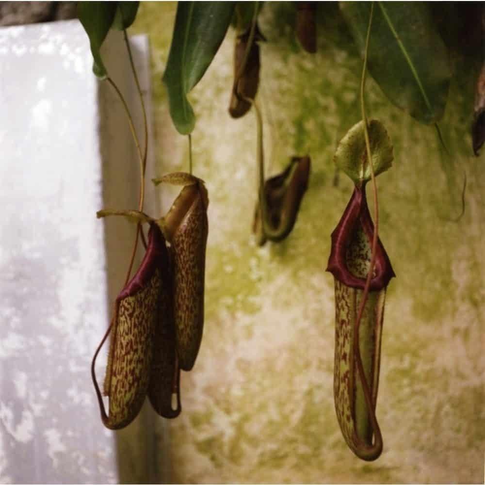 "Dianne Bos, ""Padua Botanical 3"", 2013, CPrint - Newzones Gallery, Calgary"