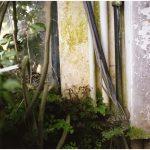 "Dianne Bos, ""Padua Botanical 4"", 2013, CPrint - Newzones Gallery, Calgary"