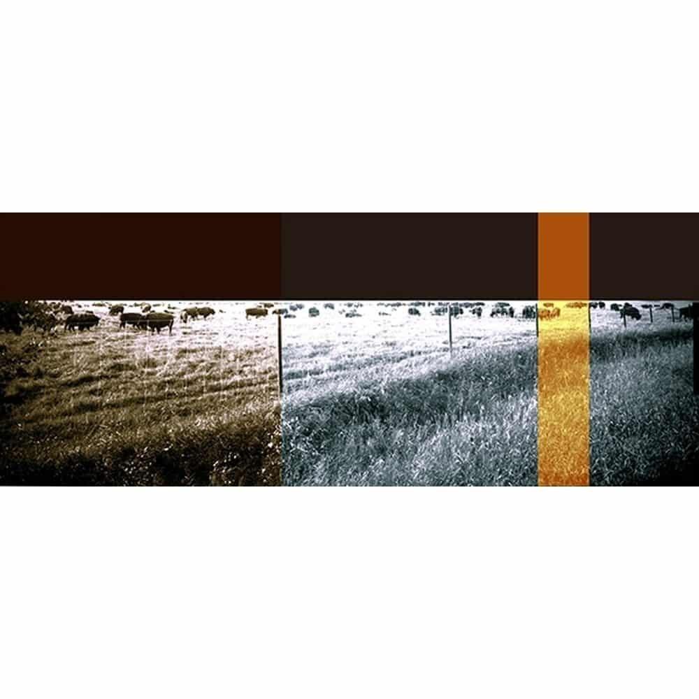 "Dianne Bos, ""Panoramic Bison Field"", 2014 - Newzones Gallery, Calgary"