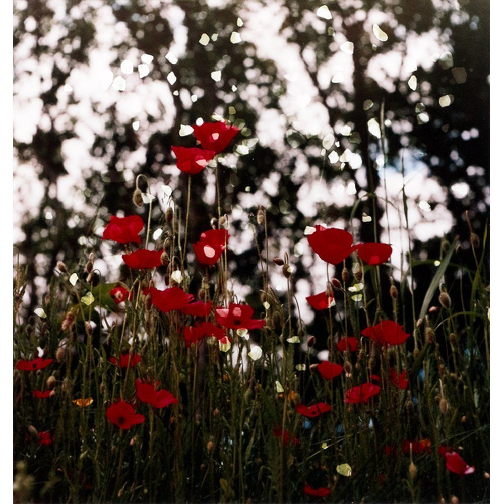 "Dianne Bos, ""Ploegsteert Poppies and Falling Stones"", 2015"