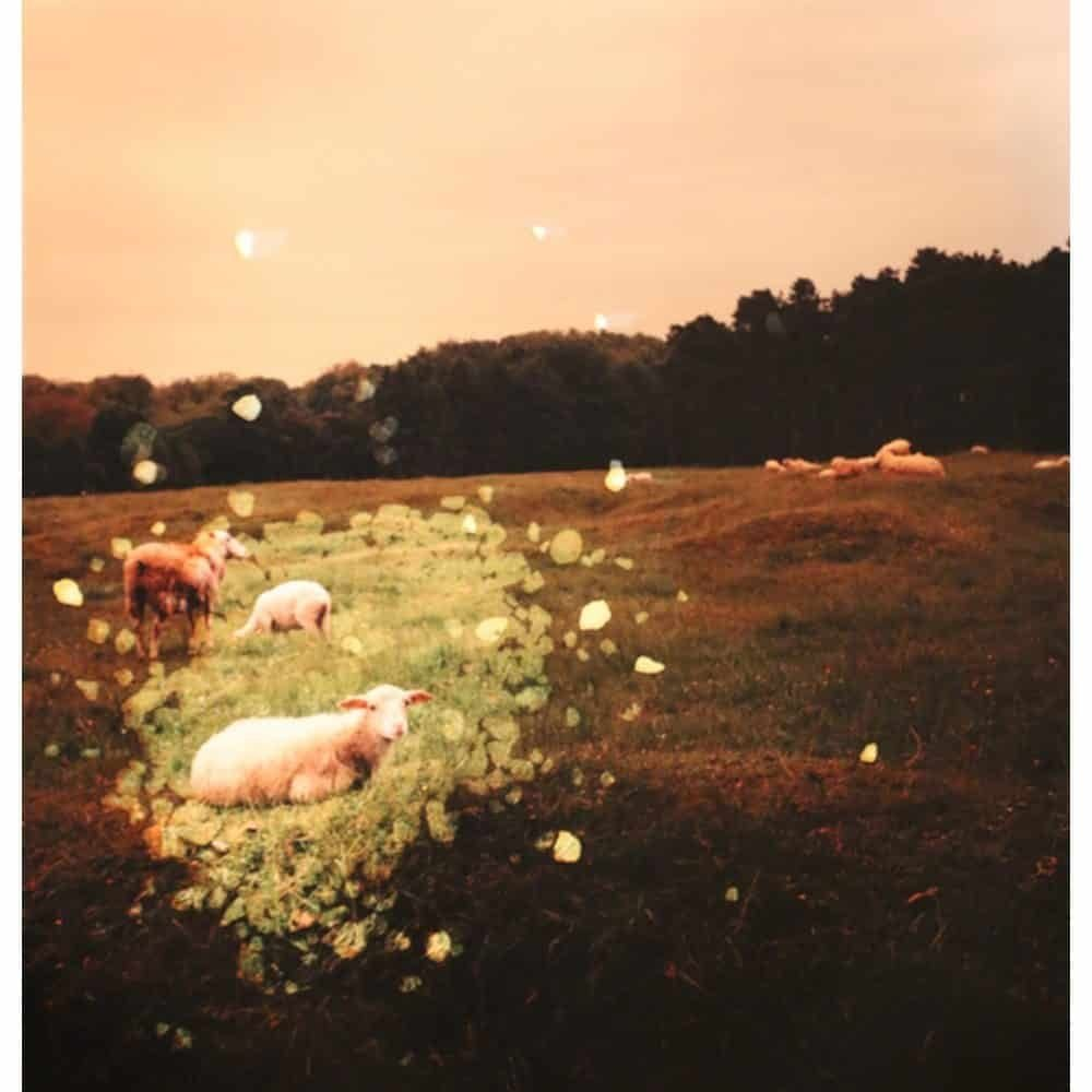 """Dianne Bos, """"Vimy Ridge Crater and Sheep, France"""", 2014 - Newzones Gallery, Calgary"""