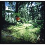 Dianne Bos, Expedition series, berry clearing, 2000, 30x30