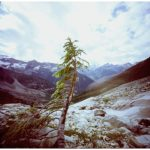 Dianne Bos, Expedition Series, Lone Tree, 2000, 30x30