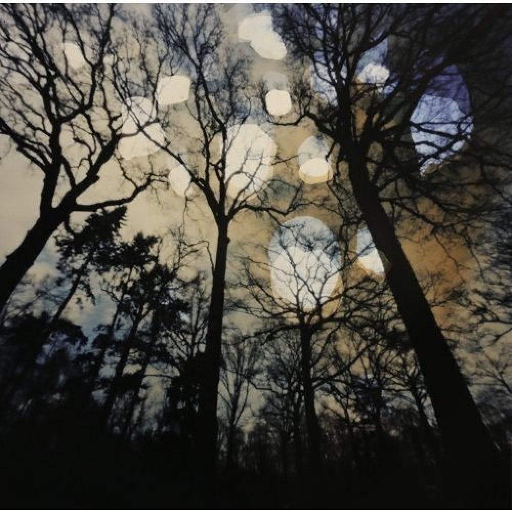 Dianne Bos, Flanders Trees 6B, 2017, 19 x 19